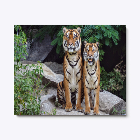 Animal Photography   Tigers Standard T-Shirt Front