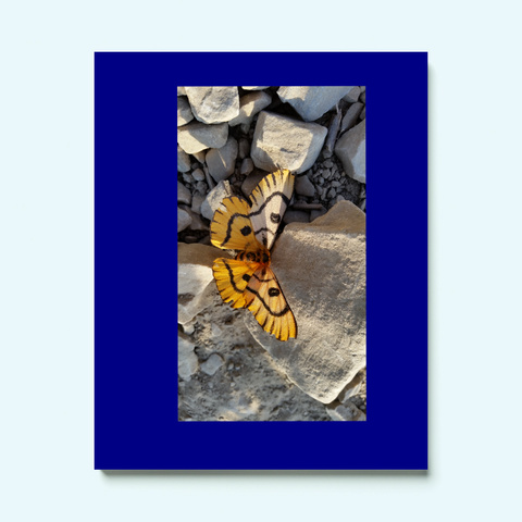 Monarch Butterfly Deep Navy T-Shirt Front
