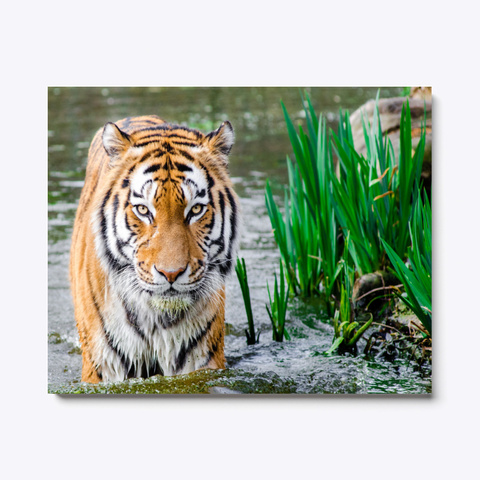 Animal Photography   Tiger In The River Standard T-Shirt Front
