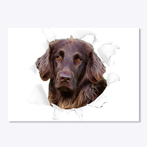 German Longhaired Pointer 3 D Sticker  White T-Shirt Front