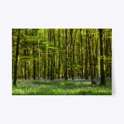 Forest Blue Flowers Landscape Poster Standard T-Shirt Front