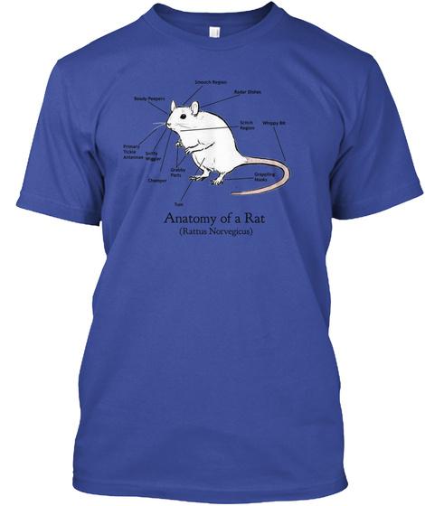 Anatomy Of A Rat Anatomy Of A Rat Rattus Norvegicus Products